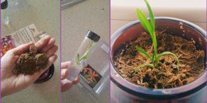 orkide2